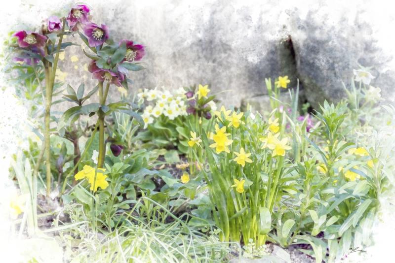 Garden Corner In Spring