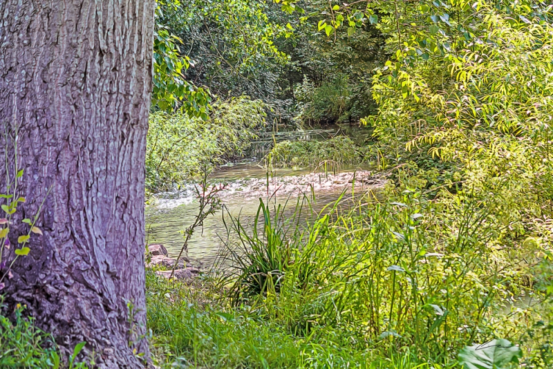 Small shallow stream glinting in sunlight through trees