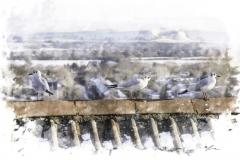 3 Winter Seagulls