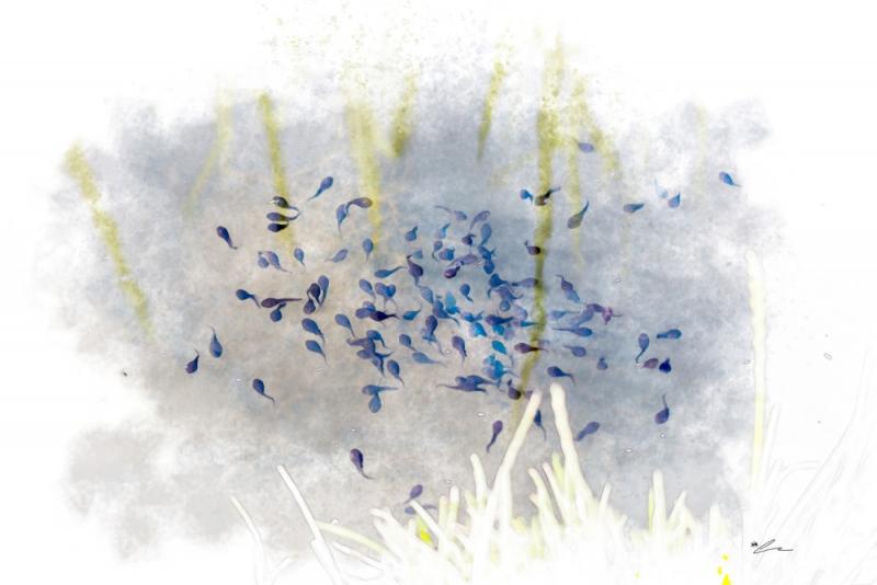 Springtime Wigglers