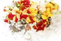 Wall Flower Bee