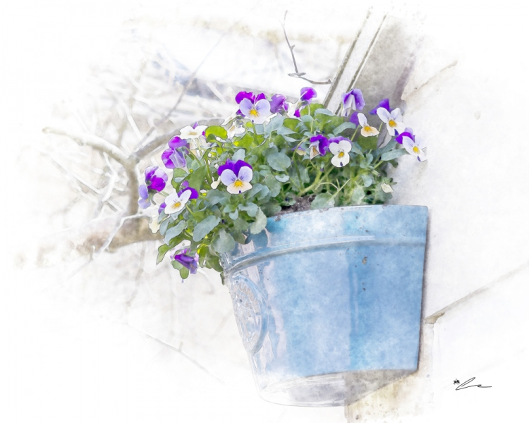 Bowl Of Pansies